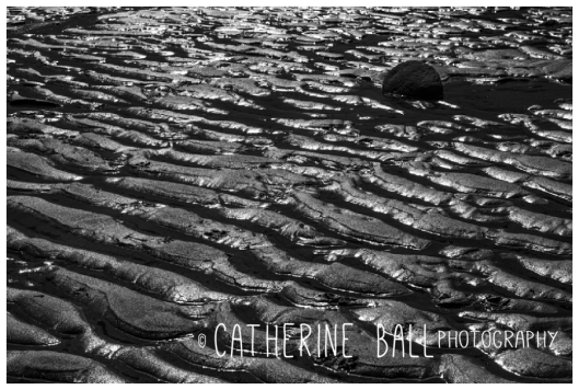 Cambois - © Catherine Ball - All Rights Reserved 2013 (7)